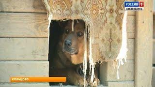 Зоозащитники собирают деньги на строительство операционной для бездомных животных