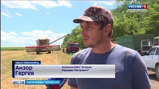 Урожай зерновых в республике в этом году будет неплохим