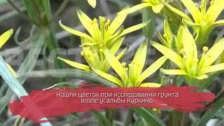 Вологодские учёные обнаружили исчезающий вид растения