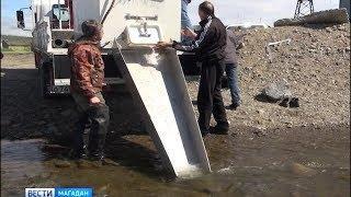 Мальков горбуши выпустили в Магаданку