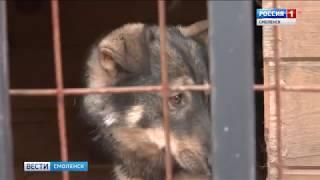 В Смоленске все больше бездомных собак находят дома
