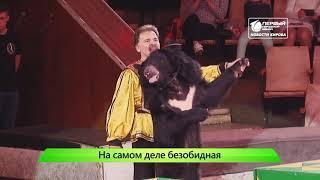ИКГ Медведица в цирке #8