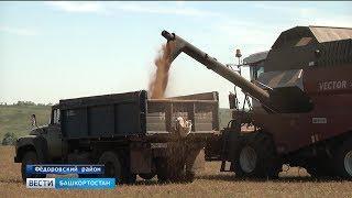 В Башкирии аграрии начали уборку рыжика