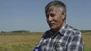 Донские аграрии планируют собрать хороший урожай самого северного риса в мире