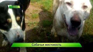 ИКГ Нападение собак #2