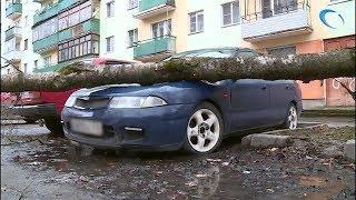 В субботу в Новгородской области от ветра пострадали деревья, машины и линии электропередачи