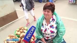 В Алтайском крае открыли сезон белых грибов