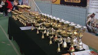 В Волгограде прошли соревнования, посвященные юбилею самбо