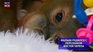 Новосибирский зоопарк показал маленького орангутана со сложной судьбой