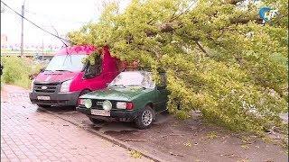 В Великом Новгороде вновь упало дерево на машины