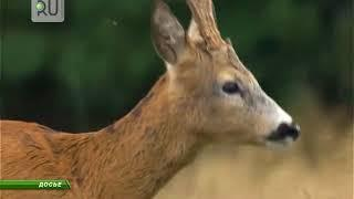 Курганские браконьеры звереют. За полмесяца — два десятка жертв