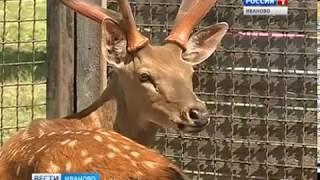 В Ивановском зоопарке снова пополнение