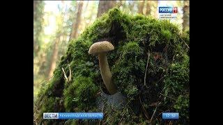 Вести Санкт-Петербург. Выпуск 17:40 от 17.08.2018