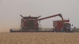 В Красногвардейском районе убирают пшеницу по технологиям будущего