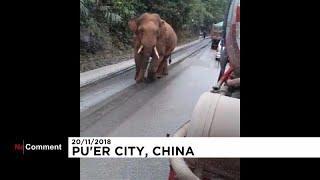 Китай: слон в гостях у селян