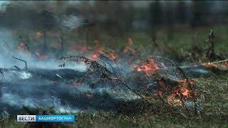 МЧС: вероятность природных пожаров не уменьшилась