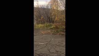 В пригороде Петропавловска на территорию школы забрели три медведя