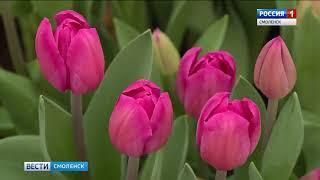 Смоленские цветоводы готовятся к Международному женскому дню