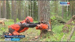 В Йошкар-Оле определили лучших вальщиков леса - Вести Марий Эл