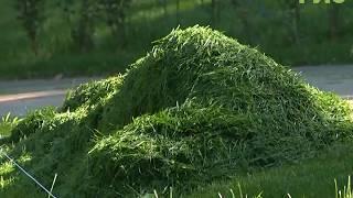 Не порастет травой место наших встреч. В Самаре ведется активная работа по покосу лишней зелени