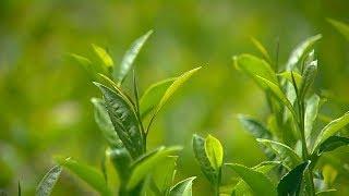 «Край аграрный». Сыр и чай