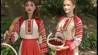 Владимирская вишня 2018