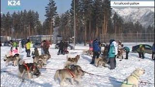 Гонки на собачьих упряжках прошли в Алтайском крае