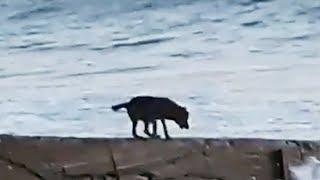 Утренние забавные животные: готовимся к купальному сезону