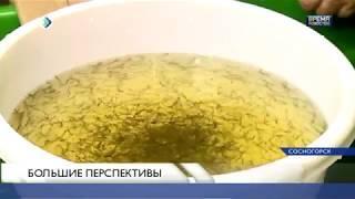Новости партнеров: «Рыбопитомник в Сосногорске запустят уже в мае»