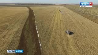Алтайский край вышел на первое место в Сибири по обмолоту зерна