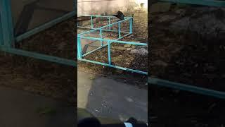 """Ворона-воришка"" в Воронеже"