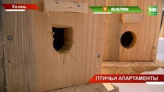 Скворцы прилетели: казанские школьники смастерили более двухсот скворечников - ТНВ