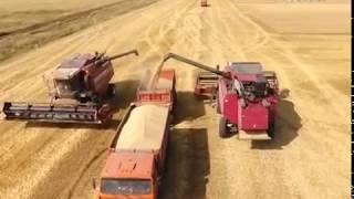 Цифровые технологии в сельском хозяйстве осваивают фермеры Самарской области