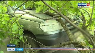 На улице Лермонотова в Пензе на припаркованный автомобиль упало дерево