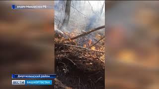 Сильный ветер в Башкирии может усугубить проблему лесных пожаров