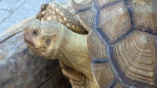 «Горячую линию». Волонтеры нашли нарушения в содержании животных в зоопарке Анапы