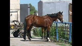 В Волжском районе показали, как лошади исцеляют физические и ментальные проблемы