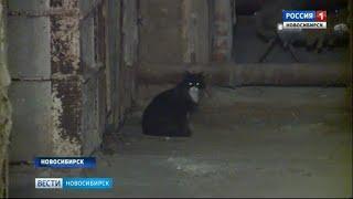 Жильцы дома в Ленинском районе спасли из подвала замурованных кошек