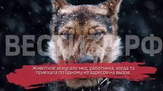 "Собака напала на фельдшера ""скорой"""