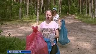 «Очистим лес от мусора!»: в Ярославской области продолжается масштабная экологическая акция