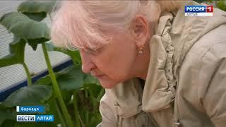 Гигантскую тыкву весом 300 кг вырастила жительница Барнаула