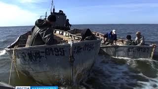 В Калининградском заливе выловили первые тонны салаки
