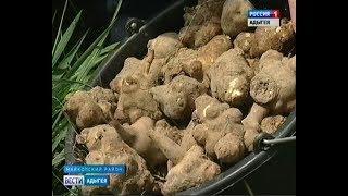В Адыгее начинают культивировать топинамбур