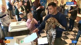 Директор зоопарка пришёл на избирательный участок с тигрятами