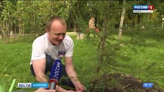 """Сотрудники ГТРК """"Карелия"""" высадили деревья в День мира"""