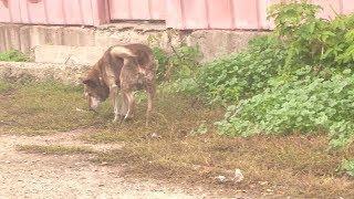 В Башкирии бродячая собака, больная бешенством, укусила ребенка