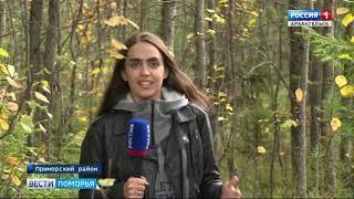 В Архангельской области отмечается неурожай лесных ягод