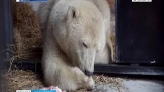 В красноярском зоопарке определили пол спасенного медвежонка