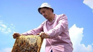 «Край аграрный». Мед и овощи