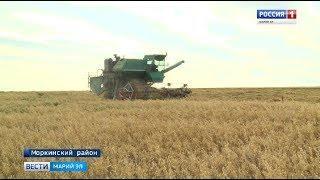 Сельхозпредприятия Моркинского района полностью завершили уборку озимых культур